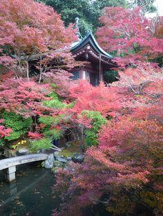 Cherry blossoms....Japan