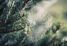kto rano wstaje, dostaje pajęczynki!~*[:D]$~serdecznie podziękowanie dla @science~*[:)]$~ za rekomendację.jest mi niezmiernie miło!~*[:)]$~