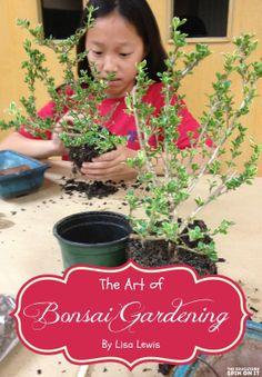 The art of bonsai gardening with kids; a great way to get kids (and teens) interested in gardening.