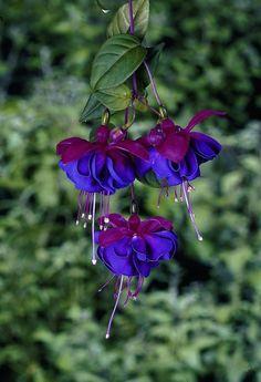 stunning-flower-garden-with-fuchsia-easy-project-to-decor-a-botanical-backyard (11)