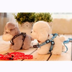 High Quality Small Dog Pet Puppy Cat Adjustable Nylon Harness with Lead leash 5 Colors to Choose free shipping 2017
