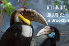 If you're looking for fun things to do in Brooklyn, NY with kids, consider these wild animal encounters at the New York Aquarium & Prospect Park Zoo!