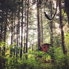 The Collaboration Blog: Treehouse Dreamin  Treehouse Point: Trillium  Issaquah, Washington.  Adventures Exploring