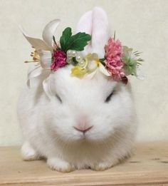 If you are searching for a pet which is not only extremely cute, but very easy to keep, then look no further than a pet bunny. Cute Baby Bunnies, Cute Babies, Bunny Tumblr, Cutest Bunny Ever, Dwarf Bunnies, Rabbit Pictures, Fluffy Bunny, White Rabbits, Kawaii