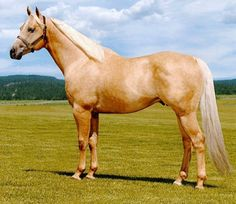 AQHA barrel racing and all round champion stallion, Frenchmans Easy Doc.