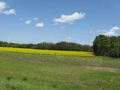 2009 - near Rocanville,SK