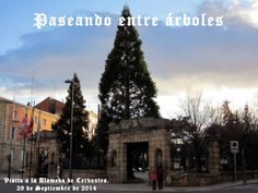 Un recorrido por la Alameda de Cervantes de Soria con loa alumnos de Geografía de España de 2º de Bachillerato, acompañados y guiados por la geógrafa Dª Carmen…