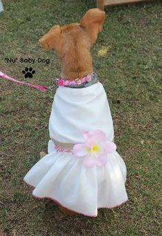 """Nuestra Princesa esta preciosa con su vestido para mascotas diseñado por """"Nu"""" Baby Dog, especialmente para la ocasion."""