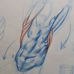 Close-up. This is what I'll be teaching at my figure structure workshop in Menorca this October! @menorcapulsar #art #artist #figure #sketch #drawing #portraitdrawing #anatomydrawing #figuredrawing #muscles #torso #core #construction #figure #la #aesthetic #howtodraw #bestdm #menorca #spain #minorca #barca #barcelona