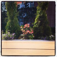Homemade flower bed!