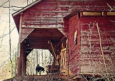 old barn and a dog
