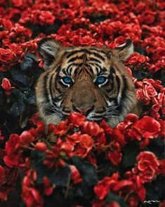 Surreal-Images-Digital-Art-Karencantuq - Animals - I Got Over The Most Difficult Story Of My Life By Wrapping My Feelings In Art - Tier Wallpaper, Animal Wallpaper, Tiger Wallpaper Iphone, Tiger Pictures, Animal Pictures, Cute Baby Animals, Animals And Pets, Funny Animals, Beautiful Creatures