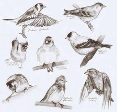 #Bird #sketch #illustrations Bird Sketches