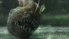 True Facts About The Angler Fish - These videos are fun! ...I'm making a wire-sculpted angler in 3D now.