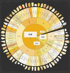 Sessantasei formaggi diversi divisi per tipo di latte (mucca, pecora, bufala, capra) e grado di morbidezza. E chissà quanti altri ne esistono... Mmm. fonte: CO.DESIGN