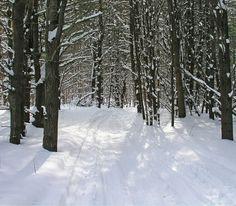 Evergreen Trail -Scanlon Creek