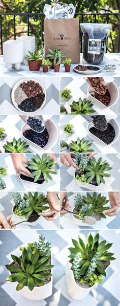 DIY Succulent Plants Tutorials - Green Plants Garden, Indoor , Office Table
