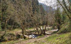 Leisure park in Pavliani village, Fthiotida Prefecture, central Greece Greek Flowers, Forest Mountain, Tree Forest, Flowering Trees, Greece, Forests, Country Roads, Mountains, Landscape