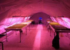 two British entrepreneurs are constructing a hydroponic farm in a network of tunnels under south London that could supply local restaurants and retailers with fresh herbs and vegetables.  Richard Ballard and Steven Dring's Growing Underground project is located in tunnels beneath the London Underground's Northern Line that were originally built as air-raid shelters during the Second World War.