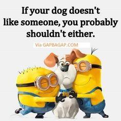 Funny Minion Joke About A Dog