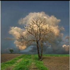 Nice timing! Cloud Tree