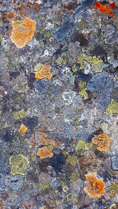 I am enthralled With all of Earth In its many tones And textures Such varieties Among societies So much beauty In its peoples Nothing stuns me more Than when some implore There's but room enough For One This makes me take a sigh City Photo, Amp, Earth, Texture, Mother Goddess, Patterns