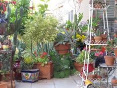 Gardening In Arizona   This Forum Is For Those In Arizona To Discuss The  Various Aspects