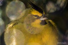 Angry bird by Bibiana Mandagará on 500px