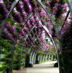 An amazing modern public garden with purple flowers.