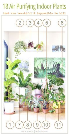 Come tour our happy indoor garden ! A list of 18 best indoor plants plus 5 essential tips on how to grow healthy house plants! Make your home more beautiful with these showy foliage and flowering plants that thrive in low light conditions, and are so easy to grow! - A Piece of Rainbow #bestindoorhouseplants #houseplantslowlight