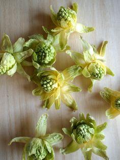 Fuki- noto (edible flower bud of the fuki) ふきのとう。