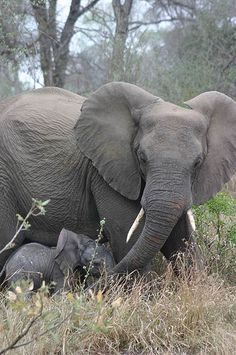 Elephant cow protecting her young baby | Flickr - Photo Sharing!