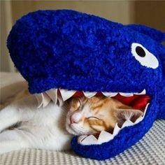 21 Cats Sleeping In The Weirdest Positions (PHOTOS)