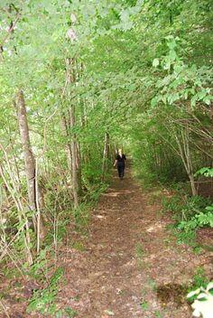 We often walk here and keep the trail open, Hällesdalen, Stenungsund - Sweden