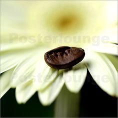 Kaffeebohnen Blume