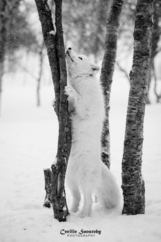 Best pictures of nature wild and wilderness Animals Of The World, Animals And Pets, Cute Animals, Pretty Animals, Wild Animals, Wolf Spirit, Spirit Animal, Wolf Pictures, Animal Pictures