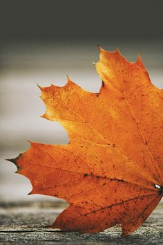 Orange leaf orange foliage autumn print fall by LisaBonowiczPhotos