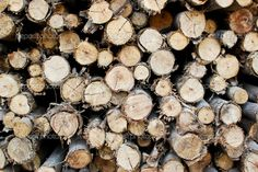 Pile of wood in timeber logs storage for construction or industrial ...