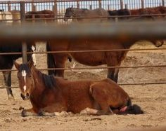 protect our horses and burros! | file8.jpg