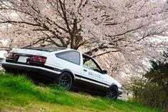 Takumi AE86 Trueno poses in the garden of Sakura Cherry Blossoms…