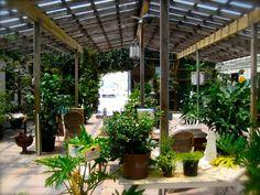 Garden Greenhouse Venue?! Perf!!