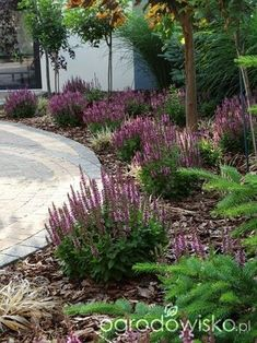 Front House Landscaping, Mailbox Landscaping, Privacy Landscaping, Outdoor Landscaping, Small Front Gardens, Back Gardens, House Landscape, Landscape Design, Houston Garden