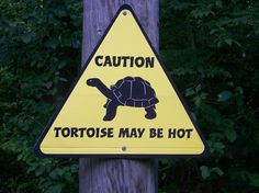 Funny sign at the zoo if seen out of 'context'! There is a large life size metal statue of a Galapogus (?sp) Tortoise on the ground near the sign that children sit on and pose for photos!