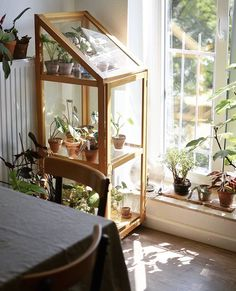 Get the Best, Less Time Consuming an Budget-Friendly Small Greenhouse Ideas and Make your Home a Sweet Home with a Touch of Nature! Room With Plants, House Plants, Indoor Greenhouse, Greenhouse Ideas, Simple Greenhouse, Balkon Design, Aesthetic Rooms, Home And Deco, Plant Decor