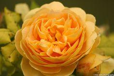 Flower photography - New sigma macro lens.