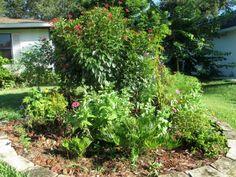 sherrys florida butterfly garden - Florida Butterfly Garden