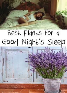 Miraculous! Do you have sleeping problems? Find out about the best Plants for a Good Night's Sleep! It's time to have a good night's sleep