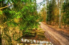 Spring Wood.