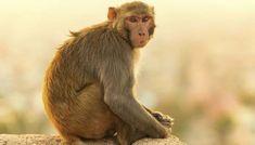 In Uttar Pradesh, Police Found An 8-Year-Old Girl Living With Monkeys1