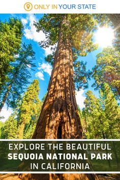 Add California's beautiful Sequoia National Park to your travel bucket list. It's a peaceful place, perfect for nature lovers, with ancient forests and giant trees. A great place to explore the outdoors, there are over 100 hiking trails to choose from, many of which are beginner and family friendly. Giant Tree, Famous Beaches, California National Parks, Hidden Beach, Sequoia National Park, Peaceful Places, Hiking Trails, Forests, Great Places